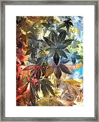 Maple Dream Framed Print by Joseph Frank Baraba