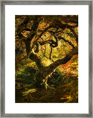 Maple Fairytale Framed Print