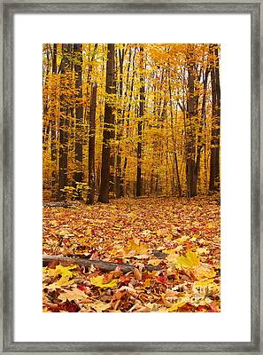 Maple Forest In Autumn Framed Print by Mircea Costina Photography