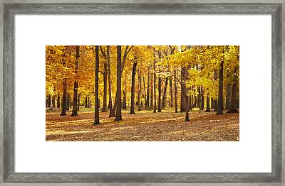 Framed Print featuring the photograph Maple Glory by Francesa Miller