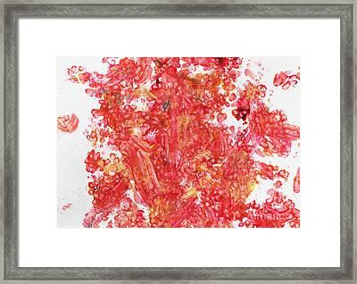 Maple Gold Framed Print by Antony Galbraith