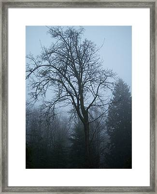 Maple In Fog Framed Print by Ken Day