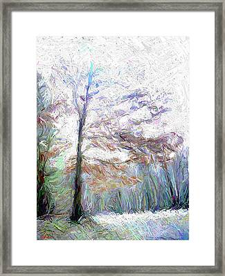 Maple In Light Framed Print by Gerhardt Isringhaus