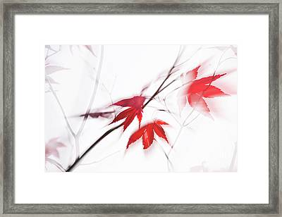 Red Maple Leaves Abstract 1 Framed Print by Natalie Kinnear