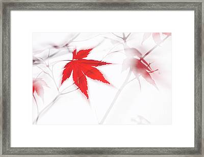 Maple Leaf Abstract 2 Framed Print
