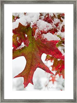 Maple Leaf And Snow 7467 Framed Print by Dan Beauvais