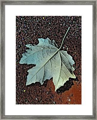 Maple Leaf.  Framed Print by Andy Za