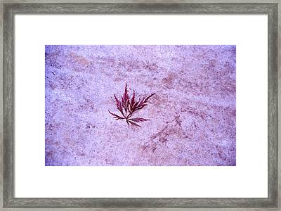 Maple Leaf On Rock Framed Print
