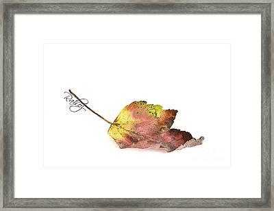 Maple Leaf Framed Print by Rahat Iram