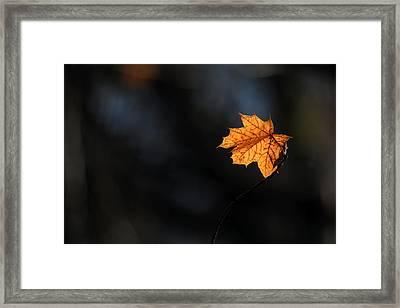 Maple Leaf Setauket New York Framed Print