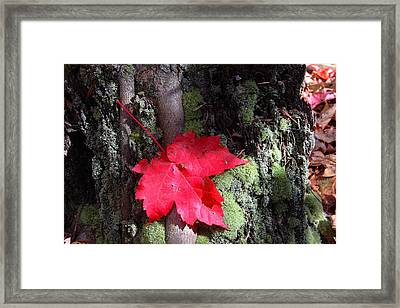 Framed Print featuring the photograph Maple Leaf Still Life by Charles Warren