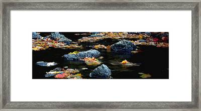 Maple Leaves-0008 Framed Print by Sean Shaw