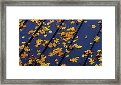 Maple Leaves On A Metal Roof Framed Print