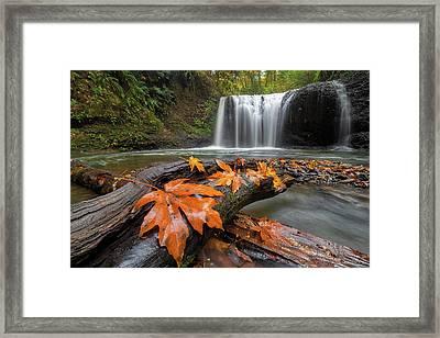 Maple Leaves On Tree Log At Hidden Falls Framed Print