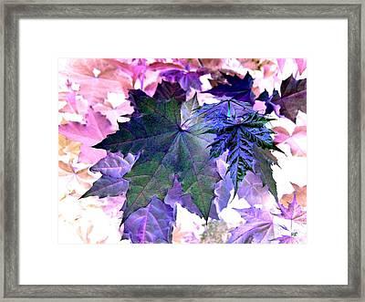 Maple Magnetism Framed Print