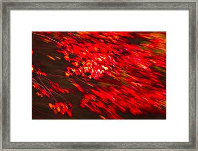 Maple Red Abstract Framed Print