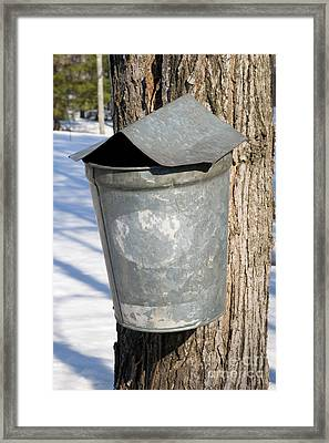 Maple Sap Pail Framed Print by Larry Landolfi