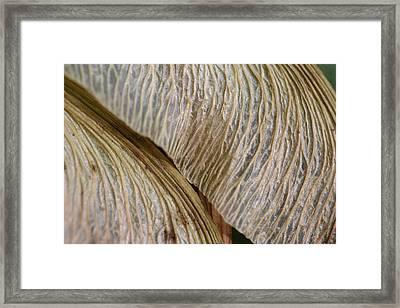 Maple Seed 202 Framed Print