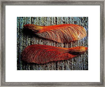 Maple Seed Pair Framed Print