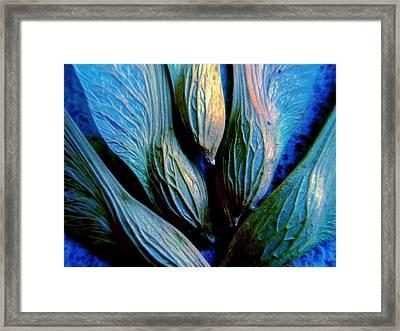Maple Seeds In Blue Framed Print
