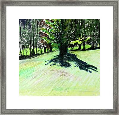 Maple Shadow Framed Print