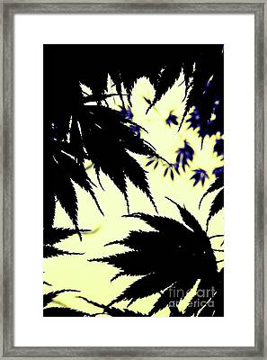 Maple Silhouette Framed Print