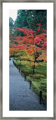 Maple Tree At The Roadside, Sanzen-in Framed Print by Panoramic Images