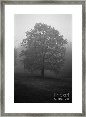 Maple Tree In Fog Framed Print by Lowell Anderson
