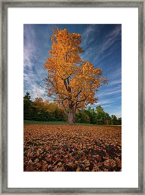 Maple Tree In Vaughan Woods Framed Print by Rick Berk
