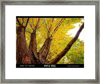 Maple Tree Poster Framed Print by James BO  Insogna