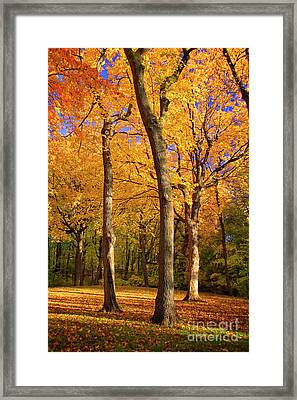 Maple Treo Framed Print