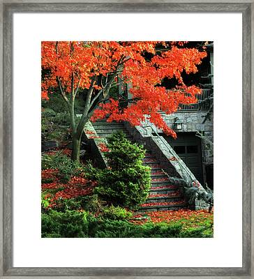 Maple Umbrella Framed Print by Jessica Jenney