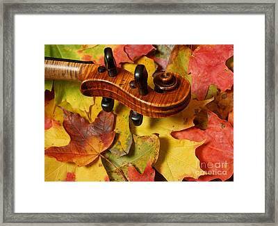 Maple Violin Scroll On Fall Maple Leaves Framed Print