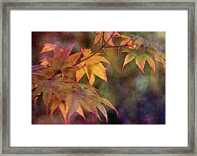 Maples Golden Glow 5582 Idp_2 Framed Print