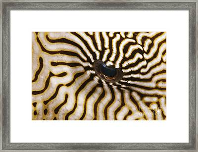 Mappa Pufferfish Eye Framed Print by Steve Rosenberg - Printscapes