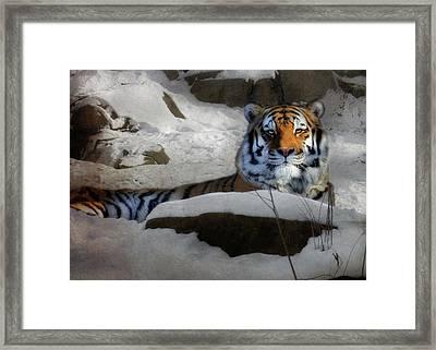 Mara Framed Print by Lori Deiter
