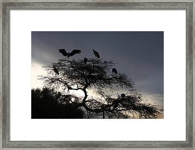 Marabou Stork Come Home To Roost Framed Print by Aidan Moran