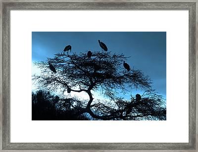 Marabou Stork, Ethiopia, Africa Framed Print by Aidan Moran