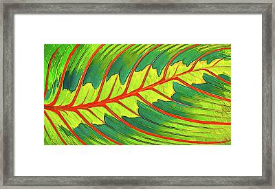 Maranta Red 2 Framed Print