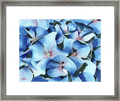 Marathon Hydrangeas Framed Print