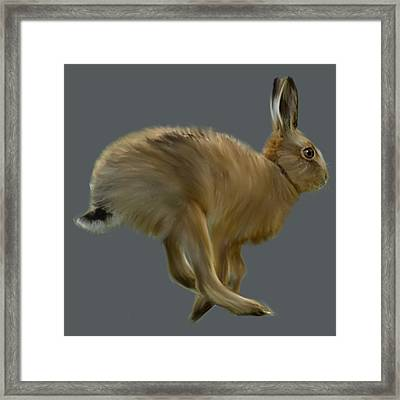 March Hare Framed Print by Dave H