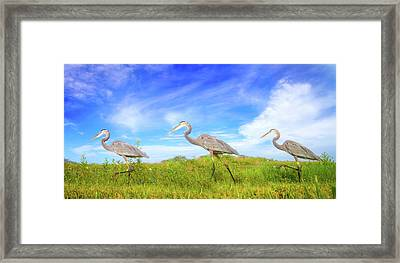 March Of The Great Blue Herons Framed Print by Mark Andrew Thomas