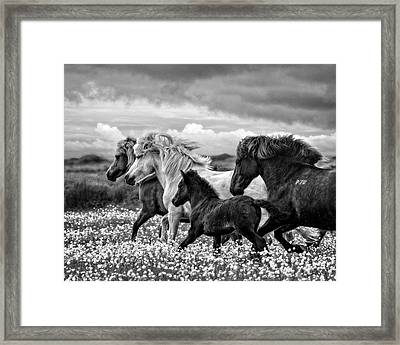 March Of The Mares Framed Print by Joan Davis