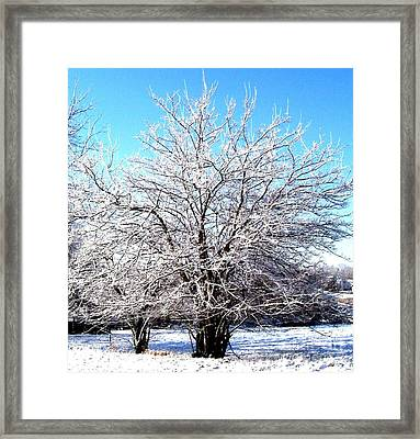 March Tree Framed Print by Marsha Heiken