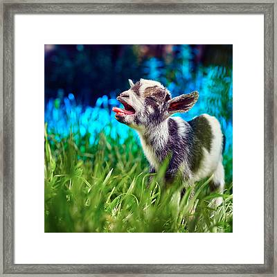 Baby Goat Kid Singing Framed Print by TC Morgan