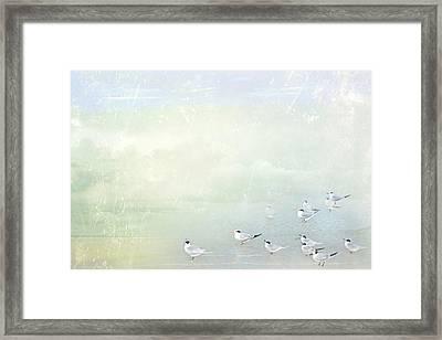 Marco Morning Framed Print by Karen Lynch