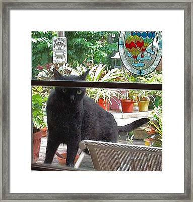 Marco Wants In Framed Print by Fred Jinkins