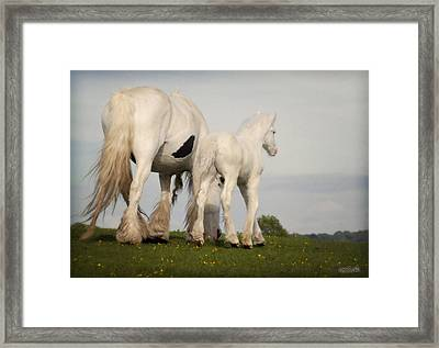Mare And Foal Framed Print by Elizabeth Sescilla