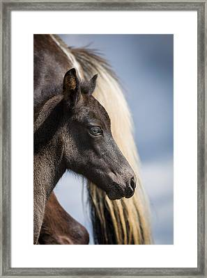 Mare And Foal, Icelandiceland Purebred Framed Print by Panoramic Images
