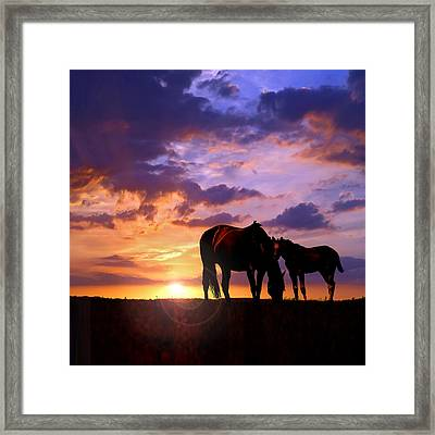 Mare And Foal Framed Print by Rod Seel